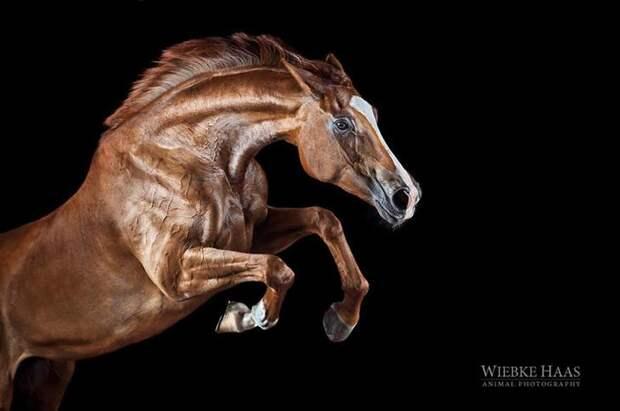 Старт животные, искусство, лошади, фотография