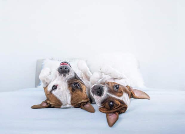 Лапы вверх: 13 фотографий весёлых собак с необычного ракурса