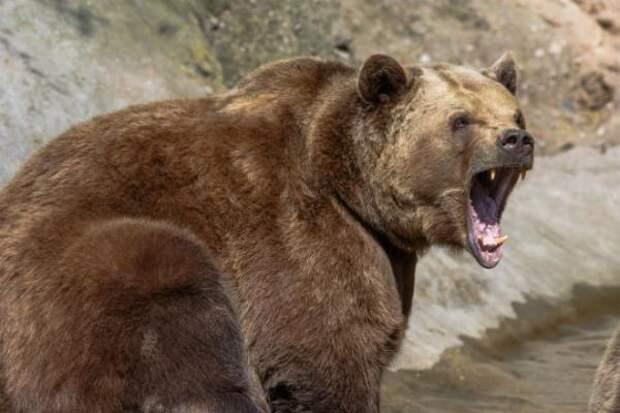 В горах Сочи заблудившиеся туристы наткнулись на медведя: пострадала девушка