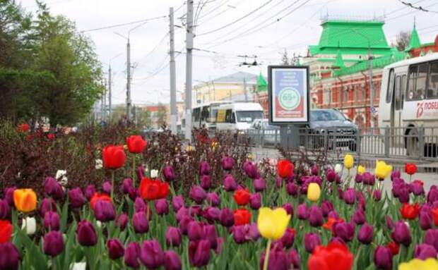 На озеленение Тулы выделяется 12,5 млн рублей