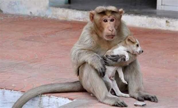 Обезьяна усыновила бездомного щенка