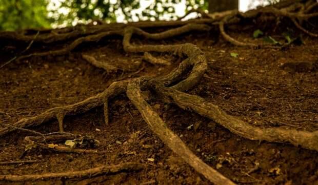 Угрожающее дому на Песчаной улице дерево спилят после получения порубочного билета