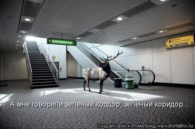 kotomatritsa_V (1) (640x426, 133Kb)