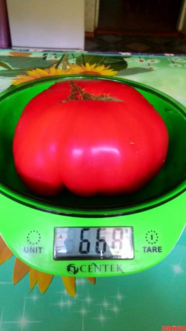 Мои суперсекреты выращивания томатов приносят богатый урожай