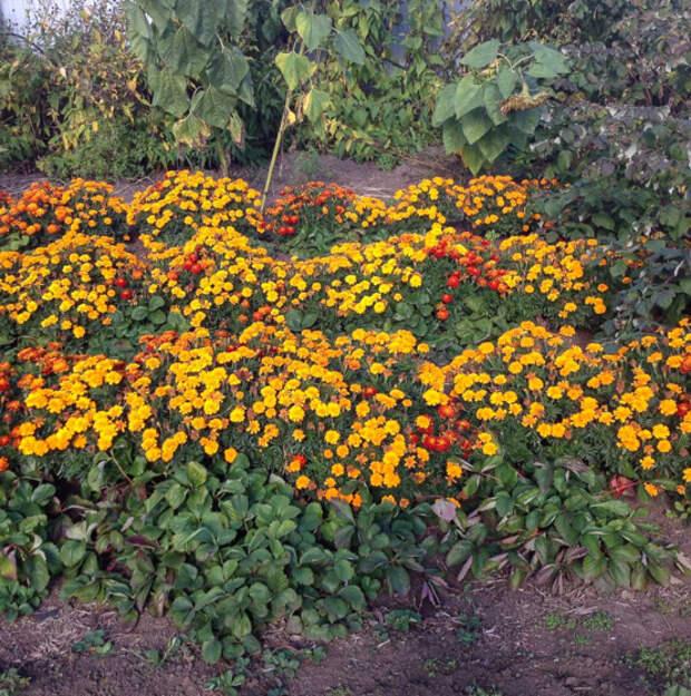 Природа творит чудеса! В своем огороде можно найти много волшебного!