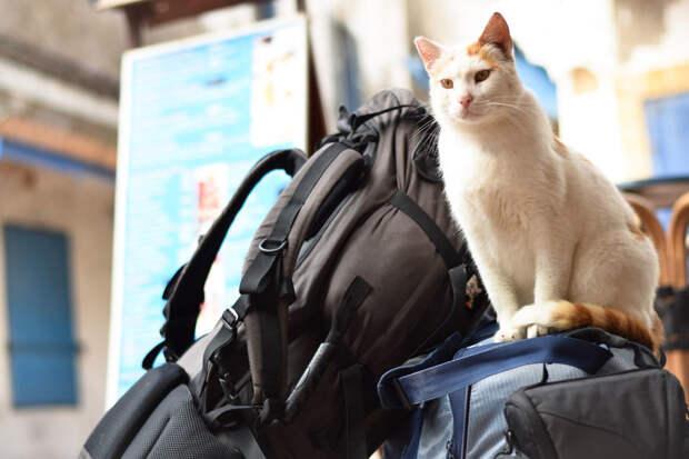 Пришел попрощаться Эс-Сувейра, город, животные, кот, марокко, проект, фотограф