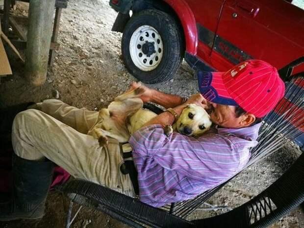 Только пес изо всех сил старался спасти хозяина, поскольку все проходили мимо лежащего на земле старика
