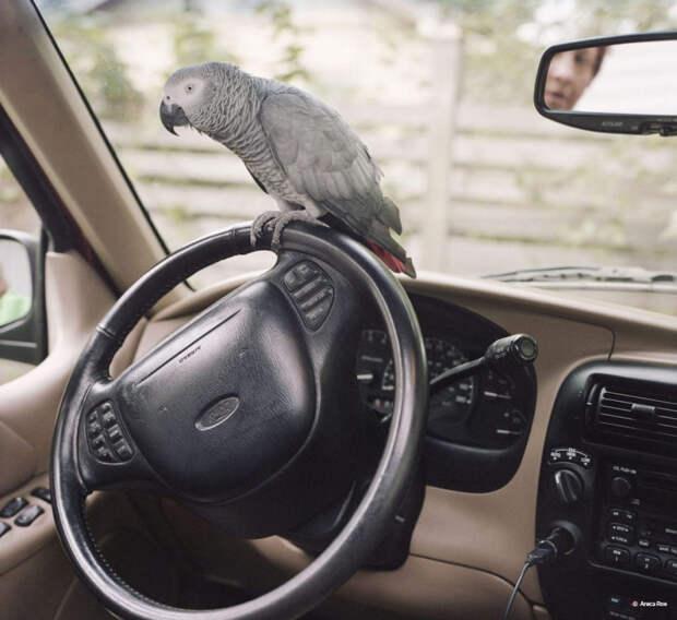 «Птицам даже смеха ради наливать нельзя — спиваются моментально». Интервью с ветеринаром о том, как лечить домашних животных
