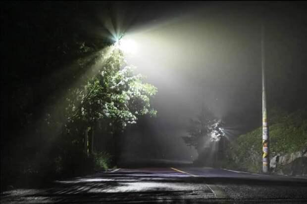 Встретил ночью на дороге неизвестное существо. Ничего подобного я раньше не видел.
