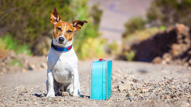 Ялта возглавила рейтинг лучших направлений для отдыха с животными