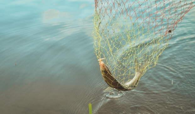 За незаконную ловлю рыбы житель Орска может лишиться свободы