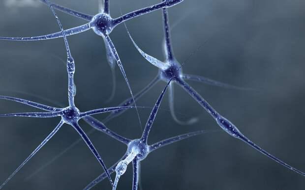 Нервные клетки все-таки восстанавливаются?