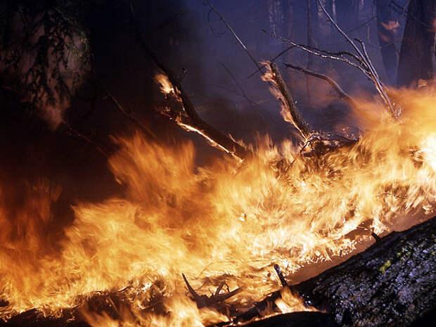 Жителей Кейптауна начали эвакуировать из-за природного пожара