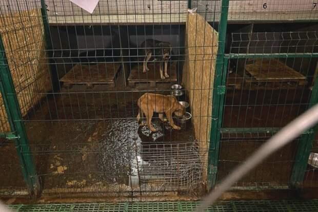 Истязание собак в приюте Севастополя проверит прокуратура
