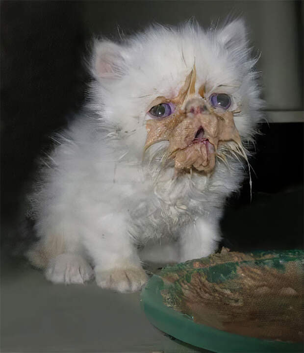 Кушайте, необляпайтесь: 20 милейших котяток, которые неумеют есть аккуратно