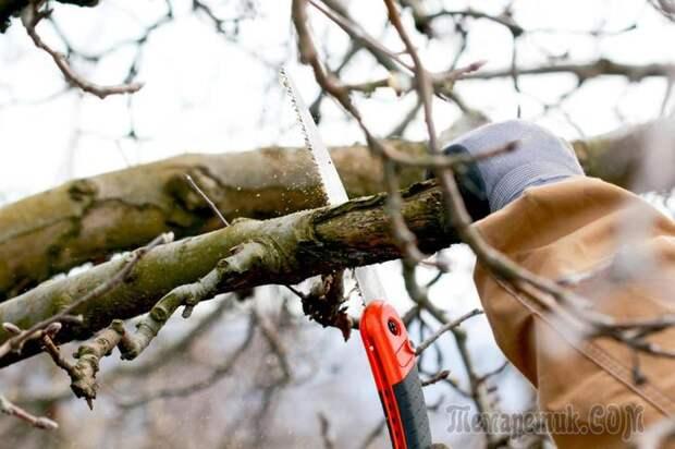 Частые ошибки садоводов-любителей