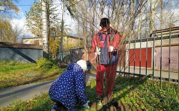 В выходные активисты рязанских ТОС высадили деревья и кустарники