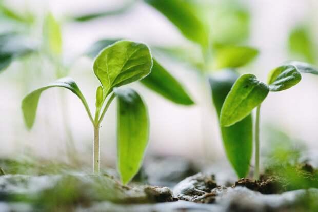 Учёные МГУ придумали, как улучшить урожай, используя меньше воды