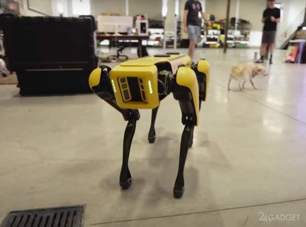 Появилось первое видео распаковки и тестирования робота-собаки Spot