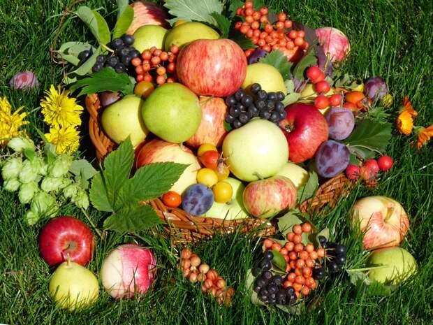 Как увеличить урожай. Растения-опылители для плодовых культур