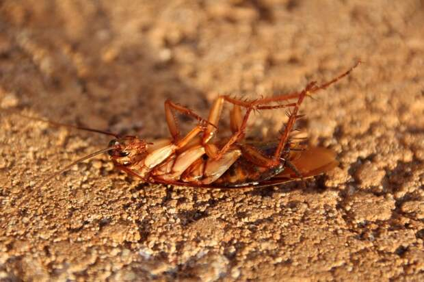 Дом на проспекте Мира обработали от тараканов