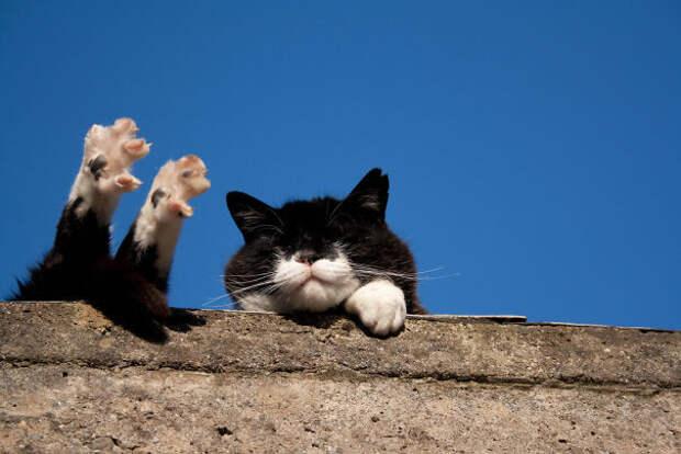 Вот она, кошачья жизнь! животные, котики, лучи, погреться, солнечные ванны, солнце, температура, тепло