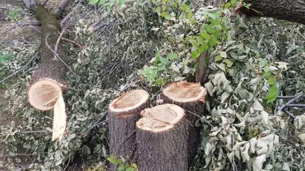 Полиция расследует вырубку 300 деревьев близ Медеу в Алматы