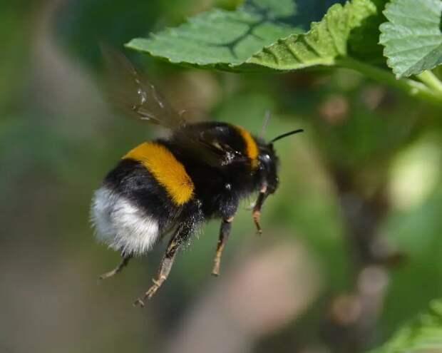 Что произойдет, если к 2035 году вымрут все пчелы