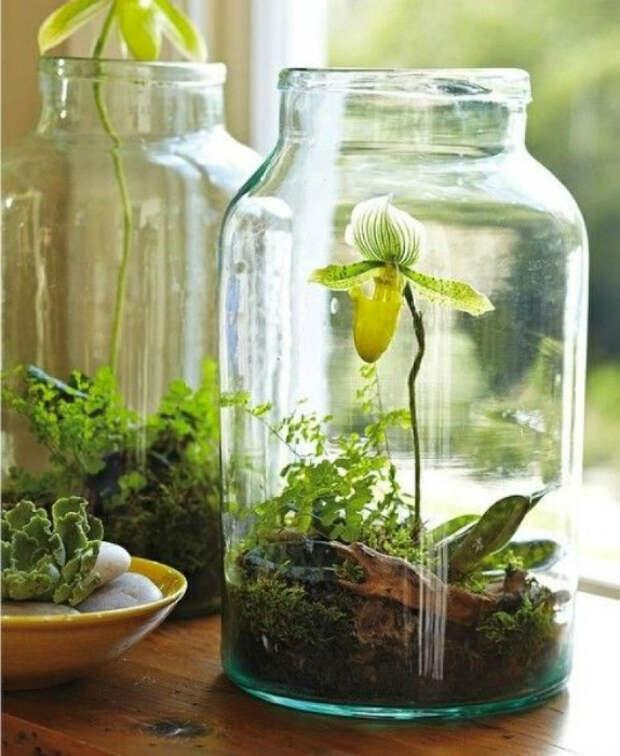Орхидея, растущая в стеклянной банке вместо обычного горшка.