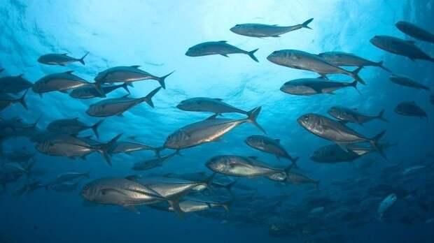 Клизма спасет отCOVID: рыбки вдохновили ученых насоздание уникальных аппаратов