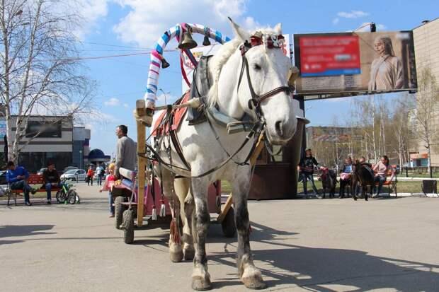 Катания на лошадях, пони и верблюдах могут запретить на Центральной площади и в скверах Ижевска