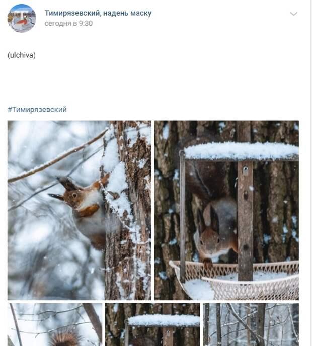 Фото дня: бедки Тимирязевского леса