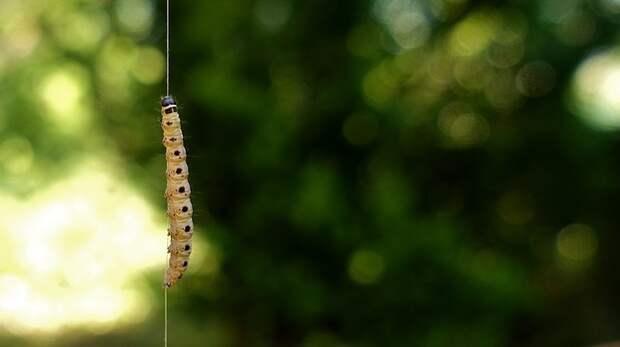 Эксперт объяснил нашествие гусениц в симферопольском парке (ВИДЕО)