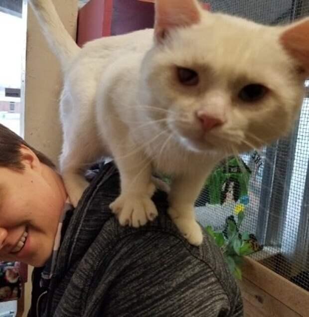 Приютский кот запрыгнул на плечи парню, чтобы тот забрал домой именного его!
