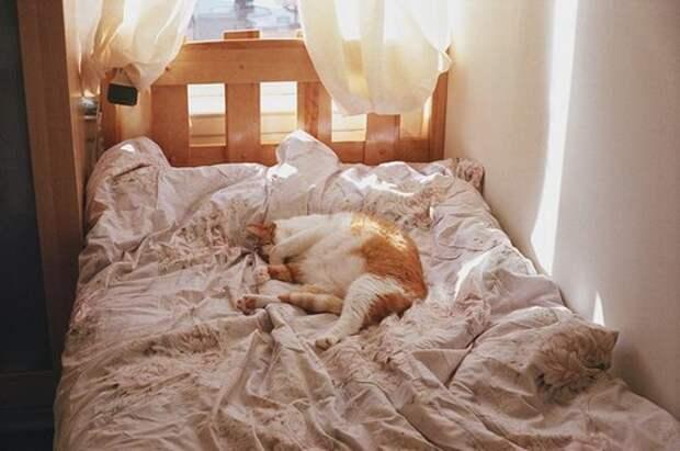 Домашние питомцы. Чего не стоит разрешать животным