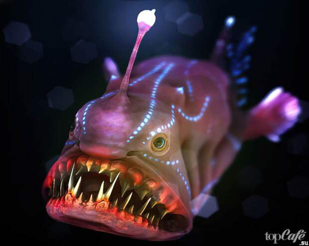 Рыбы-удильщики