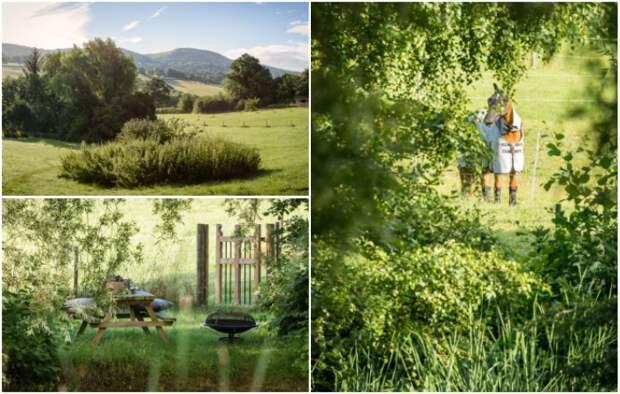 Уединение, тишина и красота окружающей природы – стали притягательны для большинства людей («Wishbone Cottage», Великобритания).   Фото: uniquehomestays.com.