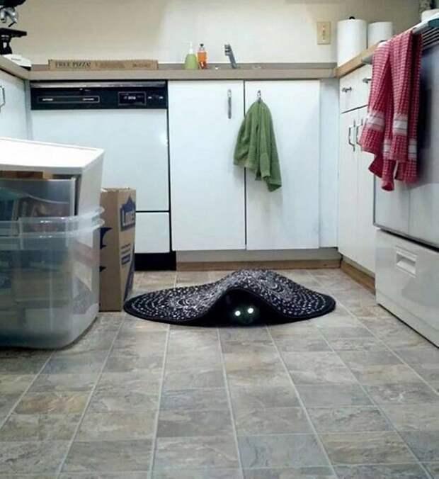 Свят, свят, свят: 27 доказательств того, что коты - исчадие ада!