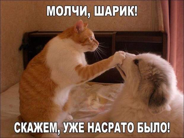 Котопост животные, коты, фото