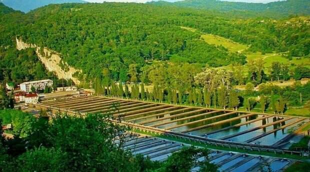 1. Форелевая ферма в Адлере заводы, привычные продукты, производство, ферма