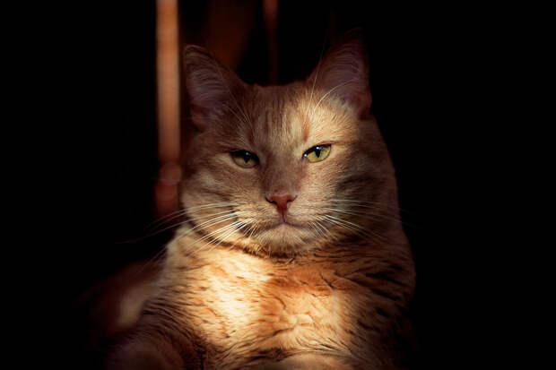 Не только по любви: 6 причин, почему кошка подолгу смотрит в глаза человеку