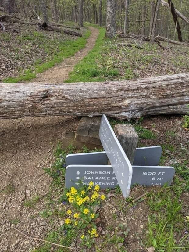 Огромное дерево упало на указатель, и буквально вбило его в землю