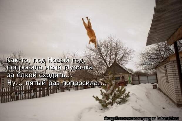 Котоматрица: Как-то, под Новый год, попросила меня Мурочка за ёлкой сходить... Ну... пятый раз попросила...
