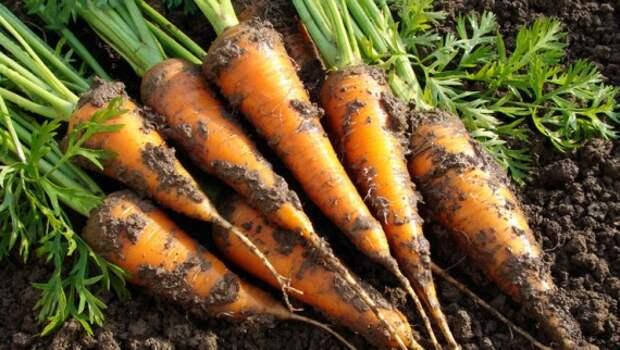 Органическое земледелие, пермакультура: 7 овощей для быстрого урожая этим летом