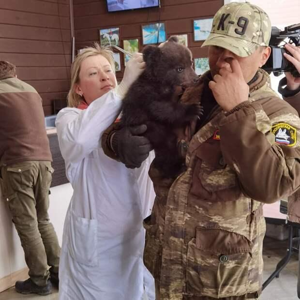 """Сотрудники питомника """"К-9"""" в Иркутске выхаживают 2-месечного медвежонка"""