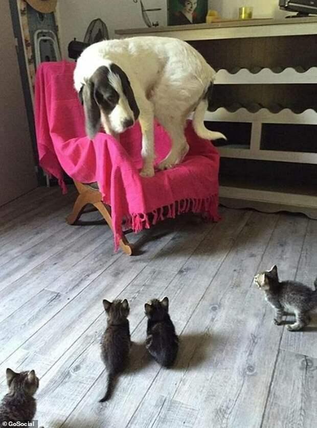 8. Кто вы, неизвестные страшные звери? домашние питомцы, забавные животные, кошки забавное, кошки и собаки, морды, реакция, смешные животные, собаки и кошки