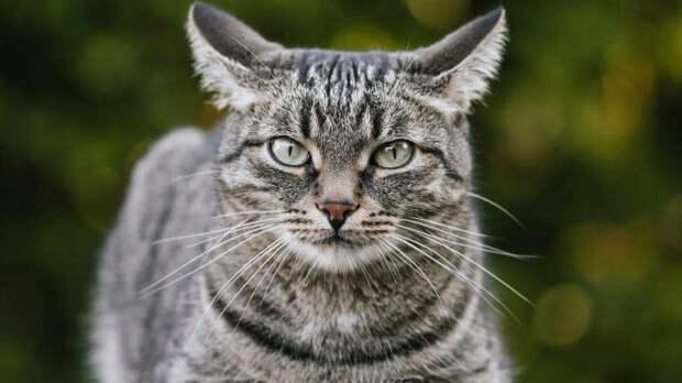Ученые обнаружили любовь кошек к воображаемым коробкам