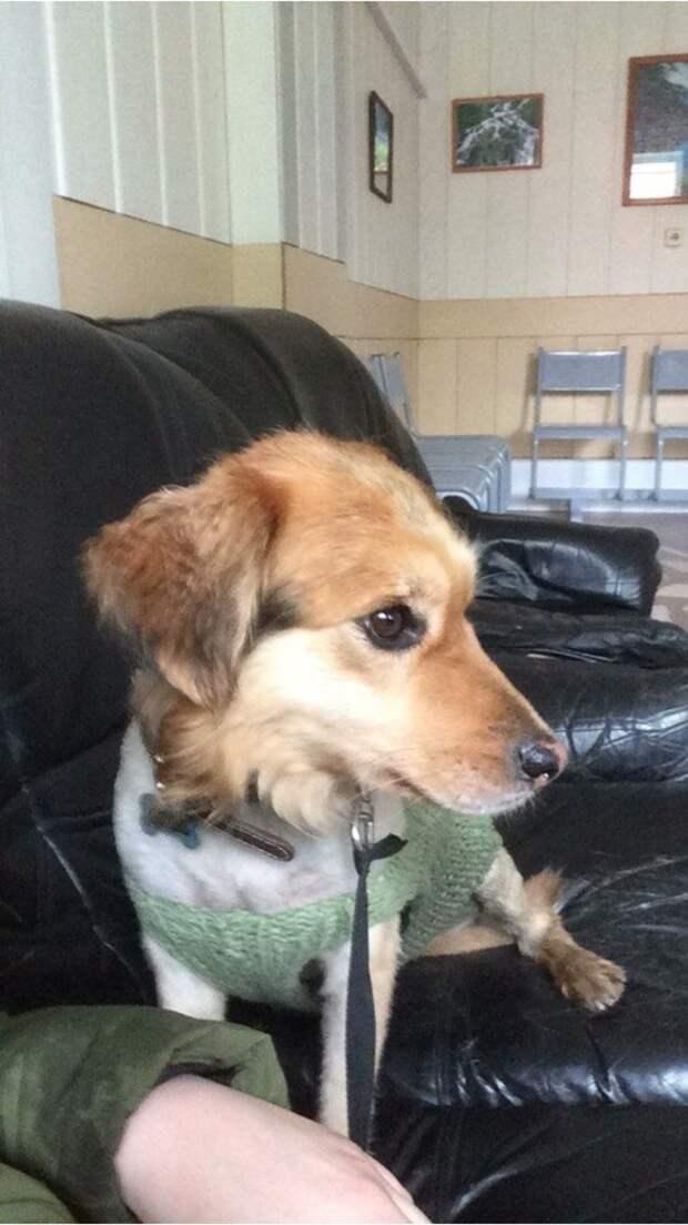 Маленькую собаку с печальным взглядом несколько раз находили на улице при странных обстоятельствах история, маленькая собака, приют, собака