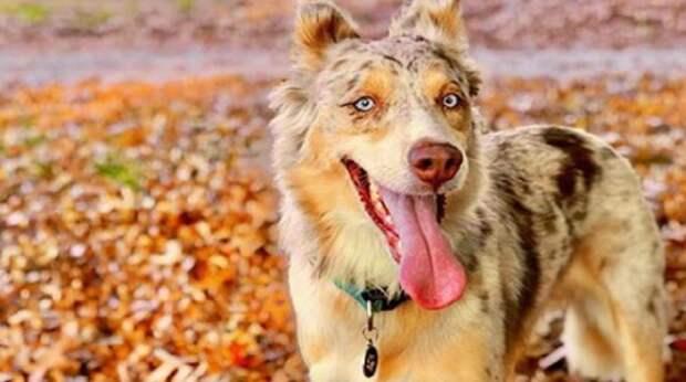 Брошенная собака грустила в приюте, пока ее не заметила девушка. Теперь на мордашке питомицы – только «улыбка»