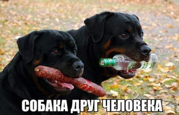 1449899760_1449749550_raznoobraznaya_4-34